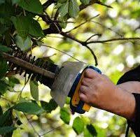 Sövény, fa metszése