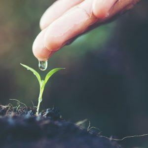 öntözés palánta növény kert